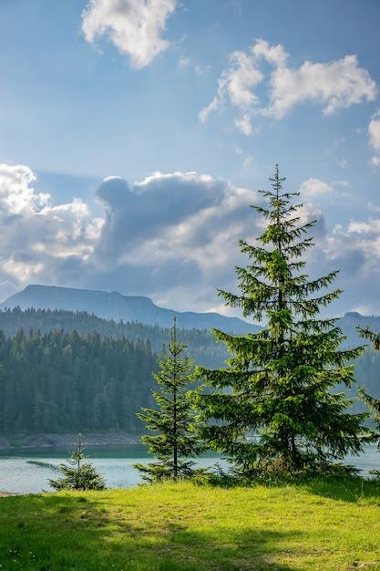 明るい緑のトウヒは、山の湖のほとりで育ちます。 Premium写真