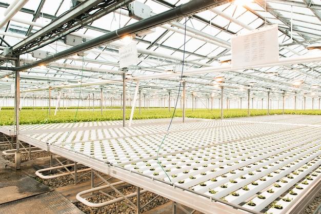 軽い温室と果物と野菜の生産。 Premium写真