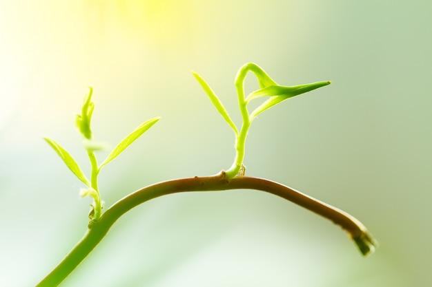 若い赤ちゃんの植物や花芽が枝から成長しています。新しい生命の概念、初め。コピースペースとクローズアップ。 無料写真