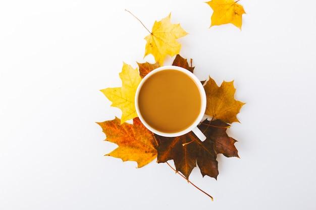 白の上に秋のフラットレイの背景 無料写真