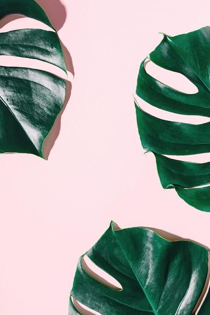 ピンクのモンスターナグリーンの葉 無料写真
