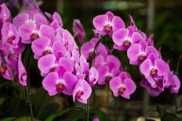Фиолетовые цветы в цветочном магазине Premium Фотографии