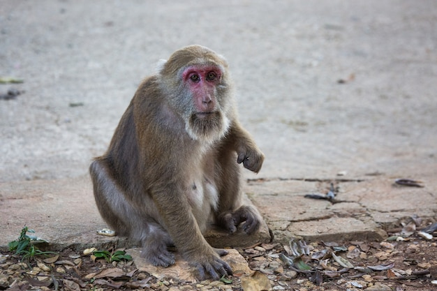 タイの路上で猿 Premium写真