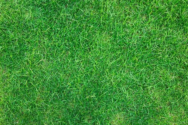 新鮮な春の緑の草のクローズアップ画像 無料写真