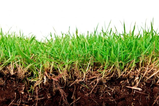 土壌と新鮮な春緑の草が白い背景で隔離しました。 無料写真
