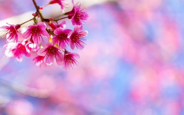 美しいピンクの花の花 無料写真