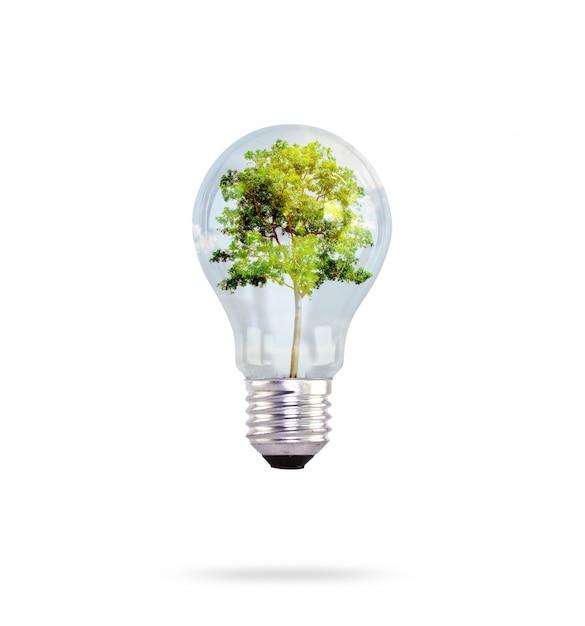 Лампочка с деревом внутри Бесплатные Фотографии