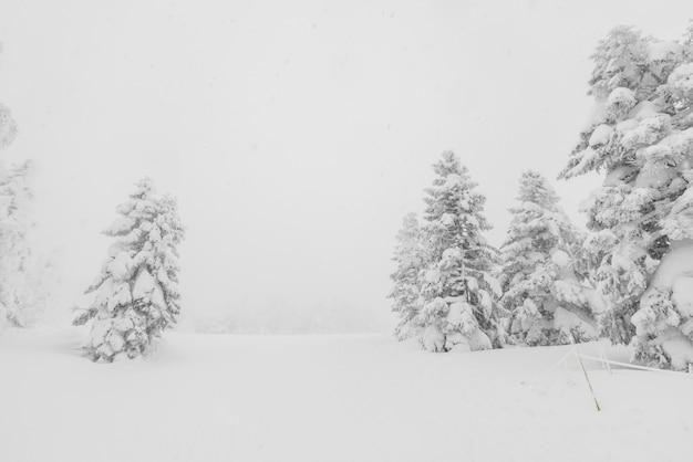 森の山で冬の嵐の日に雪で覆われた木 Premium写真