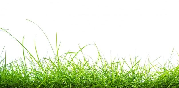 白地に緑の草 無料写真