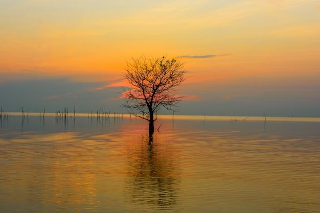 パッタルン、タイのパックラ村で日の出のカラフルな空と湖のマングローブの木 Premium写真