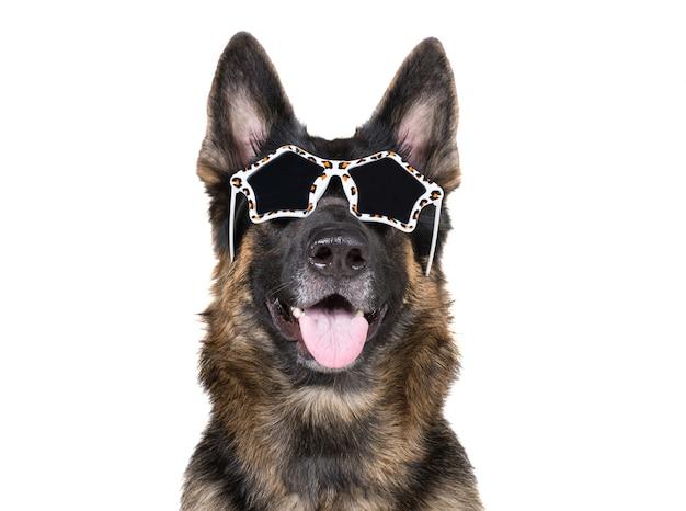 華やかなサングラスをかけている面白いジャーマンシェパード Premium写真