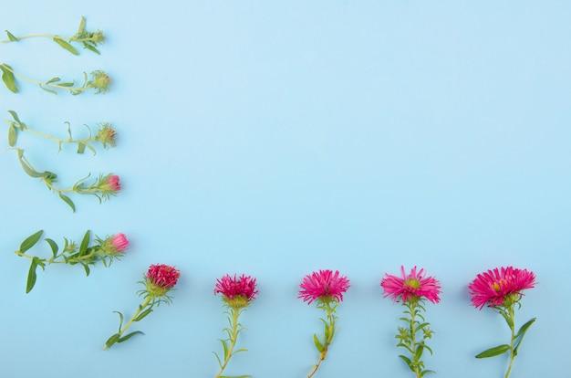 青色の背景にフレームを形成するピンクのアスターの花(つぼみから花まで) Premium写真