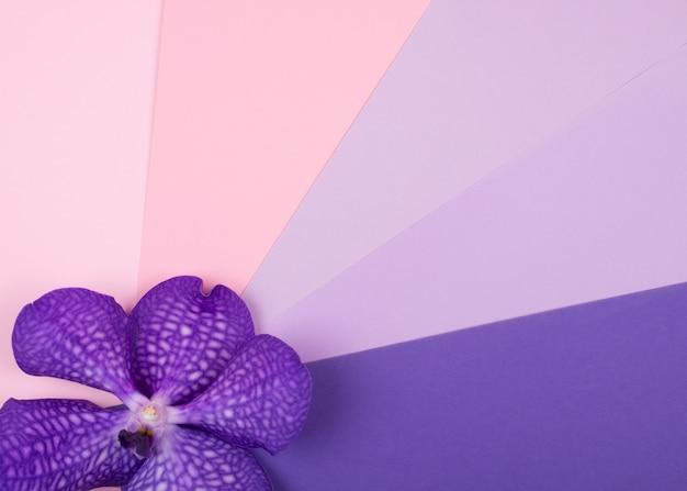 Фиолетовый цветок орхидеи на разноцветном фоне Premium Фотографии