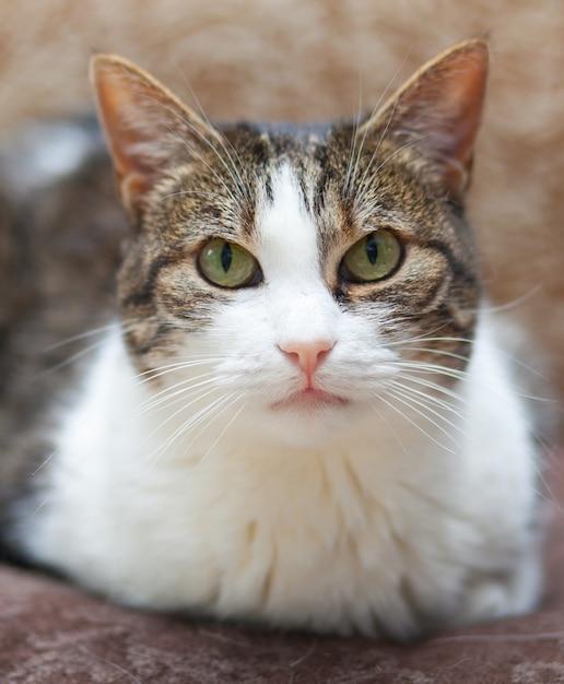 緑色の目で縞模様と白猫の肖像画 Premium写真