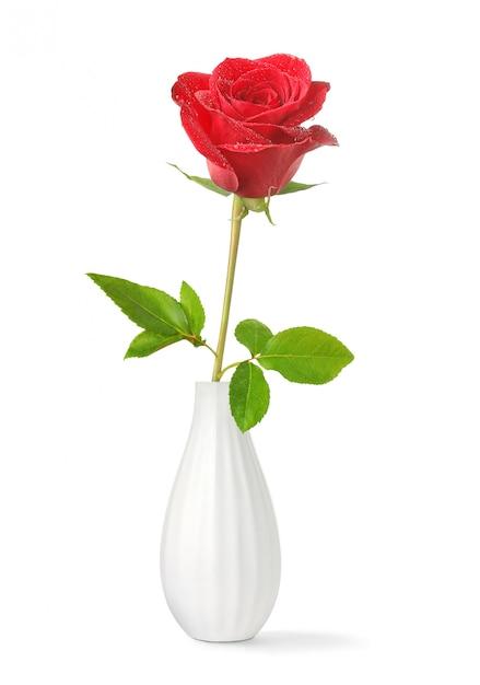 Одна красная роза в вазе на белом Premium Фотографии