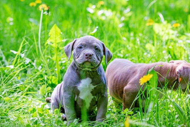 Милые маленькие собаки сидя среди желтых цветков в зеленой траве в парке. Premium Фотографии