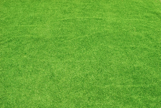 緑の芝生のテクスチャ 無料写真