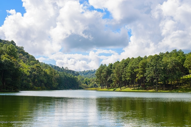 Озеро с деревьями по бокам Бесплатные Фотографии