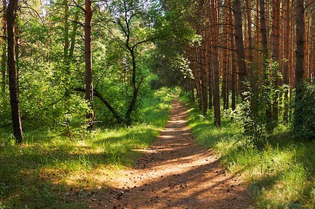 Тропинка для людей в зеленом лесу. национальный парк. Premium Фотографии