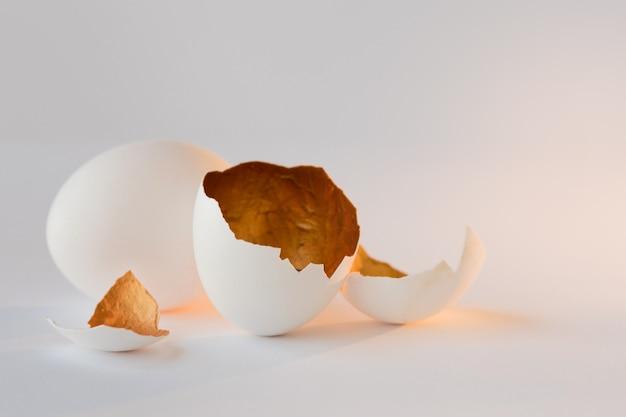 Символ новой жизни, яйца скорлупы. декоративный, золотой цвет внутри Premium Фотографии