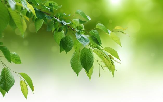 Зеленый естественный фон, зелень фон Premium Фотографии