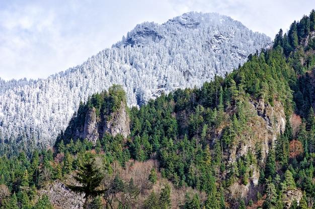 雪と松の木で覆われた山々と、緑の森の一部の眺め。 Premium写真