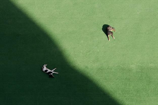 Две собаки спят на зеленой лужайке, одна в тени, одна на солнце. вид сверху, вид сверху Premium Фотографии