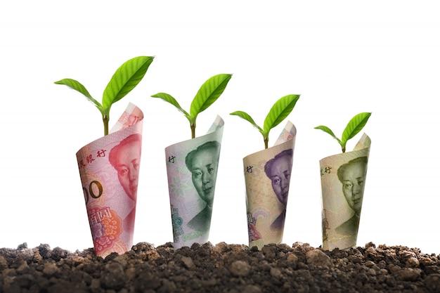 銀行券の画像は、ビジネス、保存、成長、白で隔離される経済のための土壌の植物の周りにロールバック Premium写真