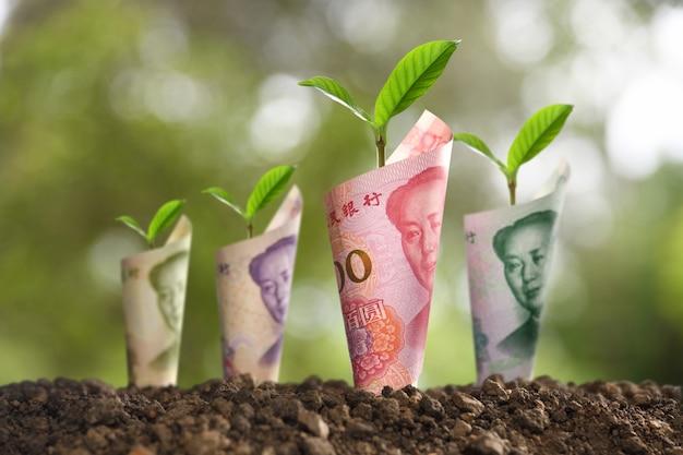 ビジネス、貯蓄、成長、経済のために、土壌の植物の周りに転がる紙幣の画像 Premium写真