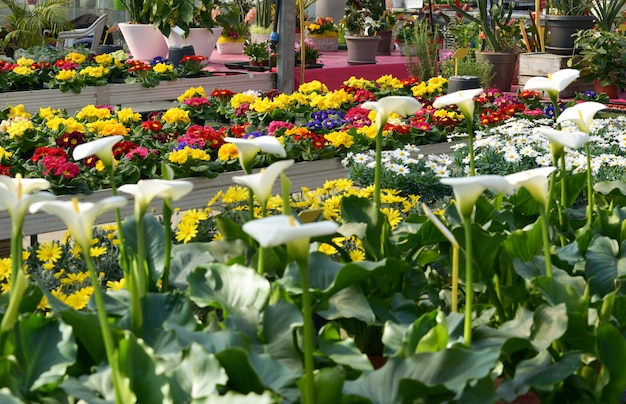フラワーショップのディスプレイまたはカラフルな花 Premium写真