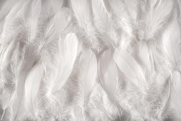 白い羽の背景 Premium写真