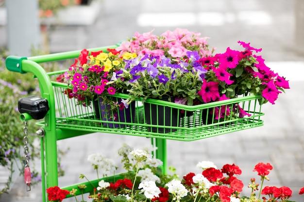 Ассортимент ярких летних цветов Premium Фотографии