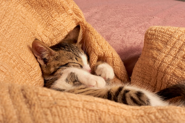 Милый маленький кот спит в кровати на одеяле Premium Фотографии