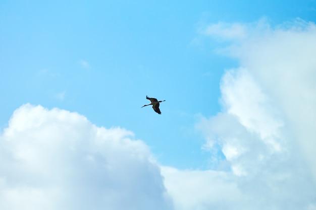 空を飛んでいるコウノトリ Premium写真