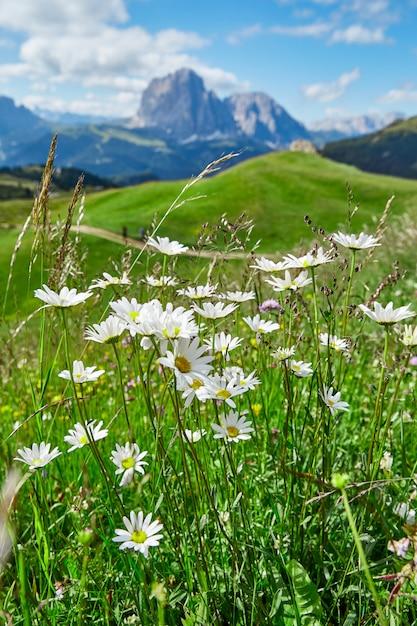 ヴァルガルデーナの牧草地と山 Premium写真