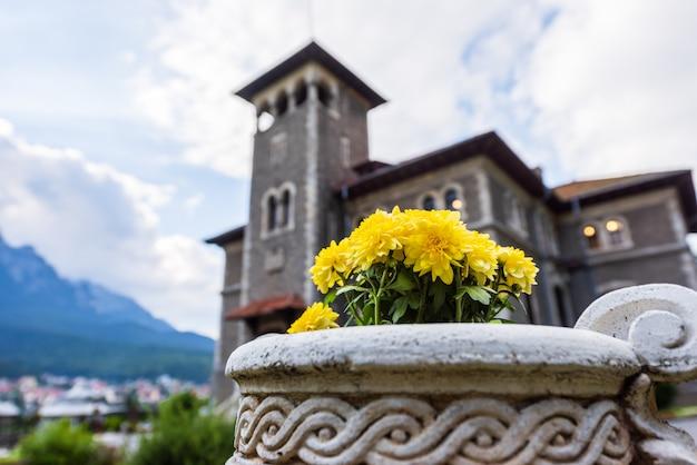 ブステニの石の花瓶に黄色の菊 Premium写真