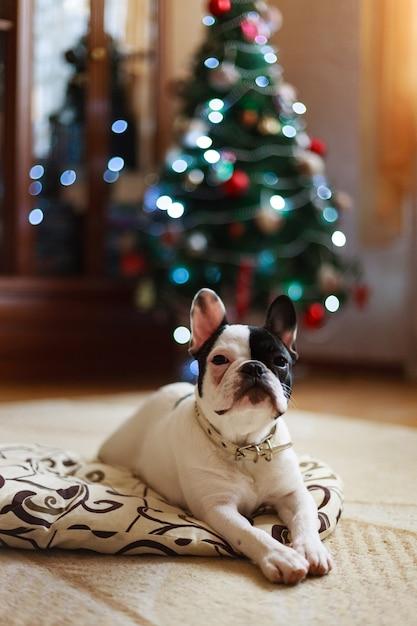 クリスマスツリーの横にある犬。 Premium写真