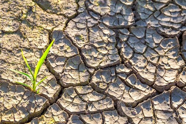 Растение в сухой потрескавшейся грязи. Premium Фотографии