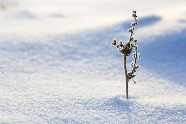 霜で覆われた乾燥した野生の花の植物の美しい抽象的なコントラスト画像 Premium写真