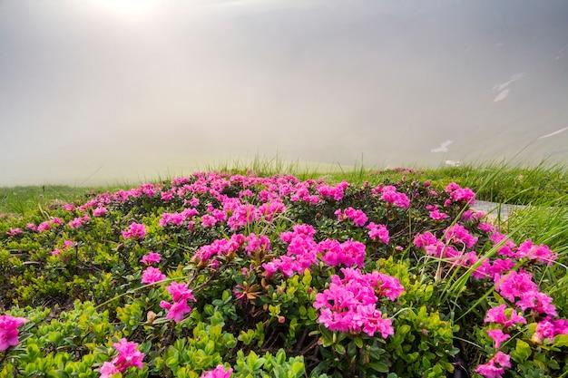 草が茂った山の牧草地にしみなく咲く太陽に照らされて Premium写真