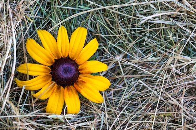 黄色の花と黄色のわら干し草 Premium写真