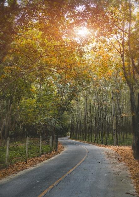 秋の季節の木側の道。 Premium写真