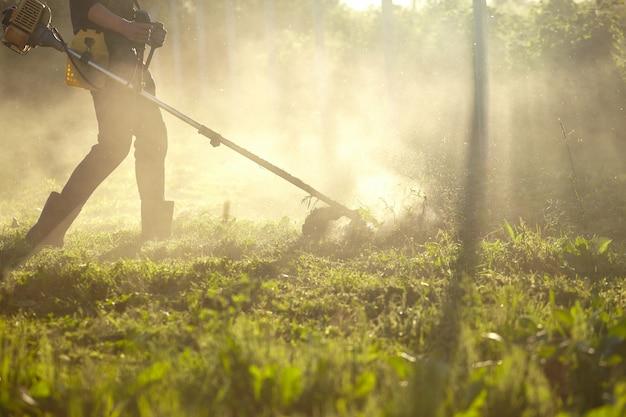 草トリマーを刈る作業。背の高い草をトリマーで刈るプロセス。カットされていないタワとカットされた草の散布粒子に選択的に焦点を合わせます。夕方の光が霧の中を進んでいく Premium写真