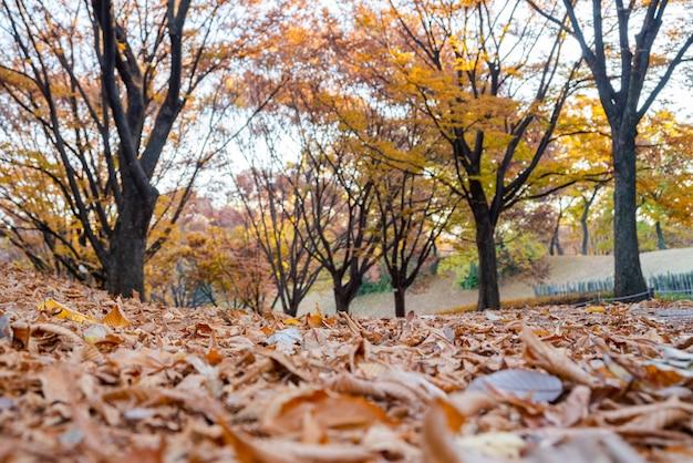 落葉。秋の風景。韓国のソウルオリンピック公園。 Premium写真