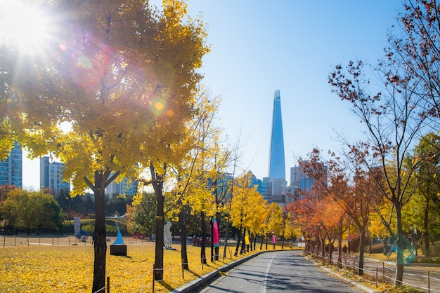 Осенние листья. осенний пейзаж. сеульский олимпийский парк в южной корее. Premium Фотографии