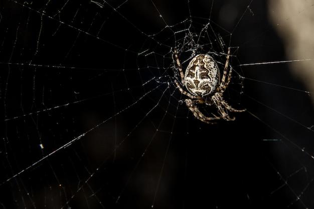 クモの巣で獲物を待っている白いクモ Premium写真