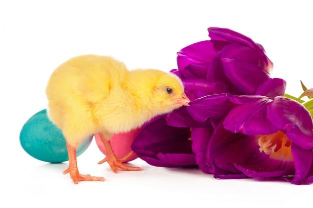 ひよこ、卵と花のイースター Premium写真