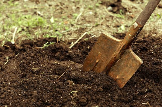 割り当てで掘りのショット Premium写真