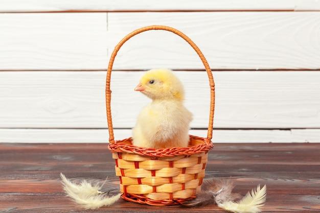 Красивая маленькая курица в гнезде Premium Фотографии