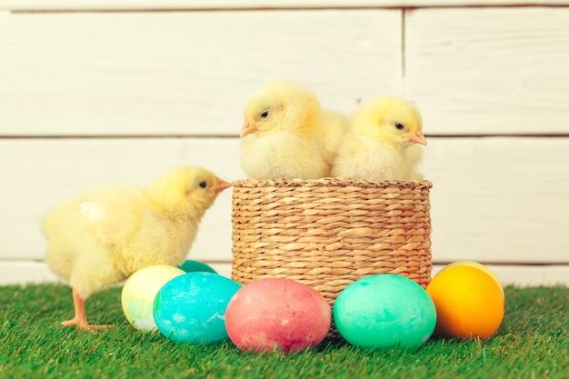 イースターエッグと鶏の緑の芝生 Premium写真